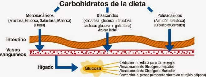 Carbohidratos-de-la-dieta