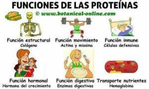 proteinas-funciones
