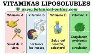 vitaminas-liposolubles-funciones-ampliado