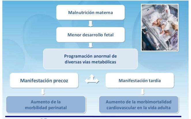 programacion-nutricional-16-1024