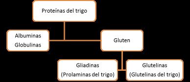 proteinas-trigo